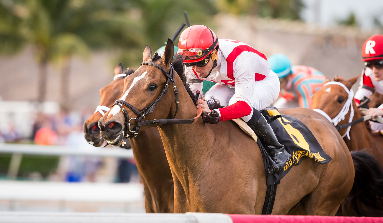 Pricedtoperfection (Temple City) wins the Sweetest Chant (G3) at Gulfstream Park on 1.30.2016. Joel Rosario up, Chad Brown trainer, Klaravich Stables and William Lawrence owners.
