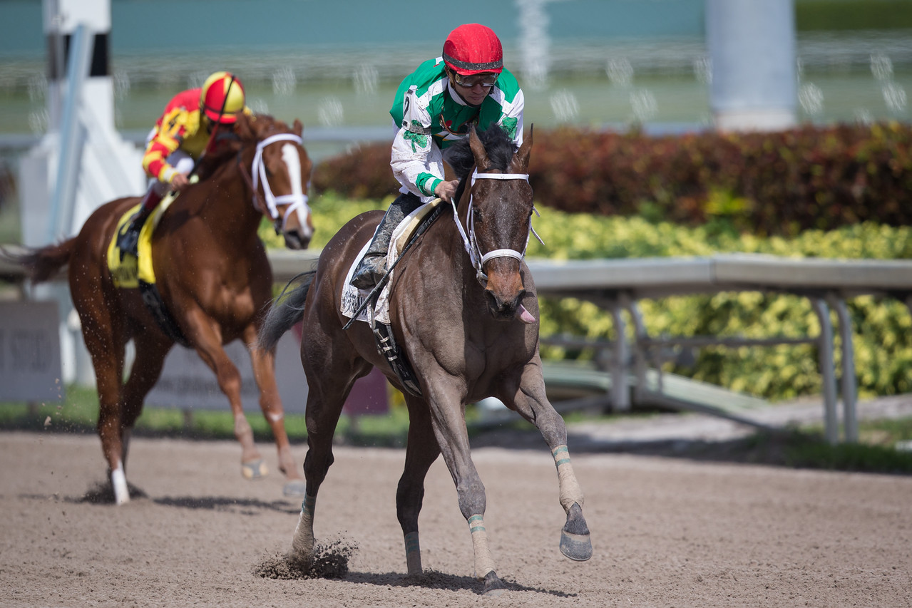 Cathryn sophia (Street Boss) wins The Forward Gal (G2) at Gulfstream Park on 1.30.2016. Joel Rosario up, John Servis trainer, Cash is King LLC owner.