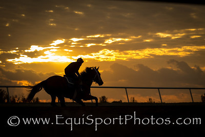 A McLaughlin trainee gallops at sunrise on a beautiful morning at Palm Meadows