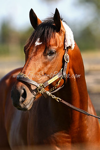 Majestic Warrior at Payson Park, Fl. 2.03.2008