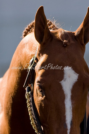 Curlin at Churchill Downs 11.29.2008