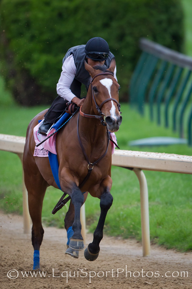 Plum Pretty works at Churchill Downs on 4.26.2011