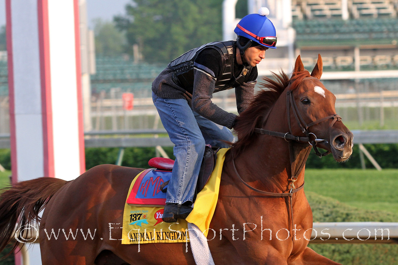 Animal Kingdom gallops at Churchill Downs 5/4/11.