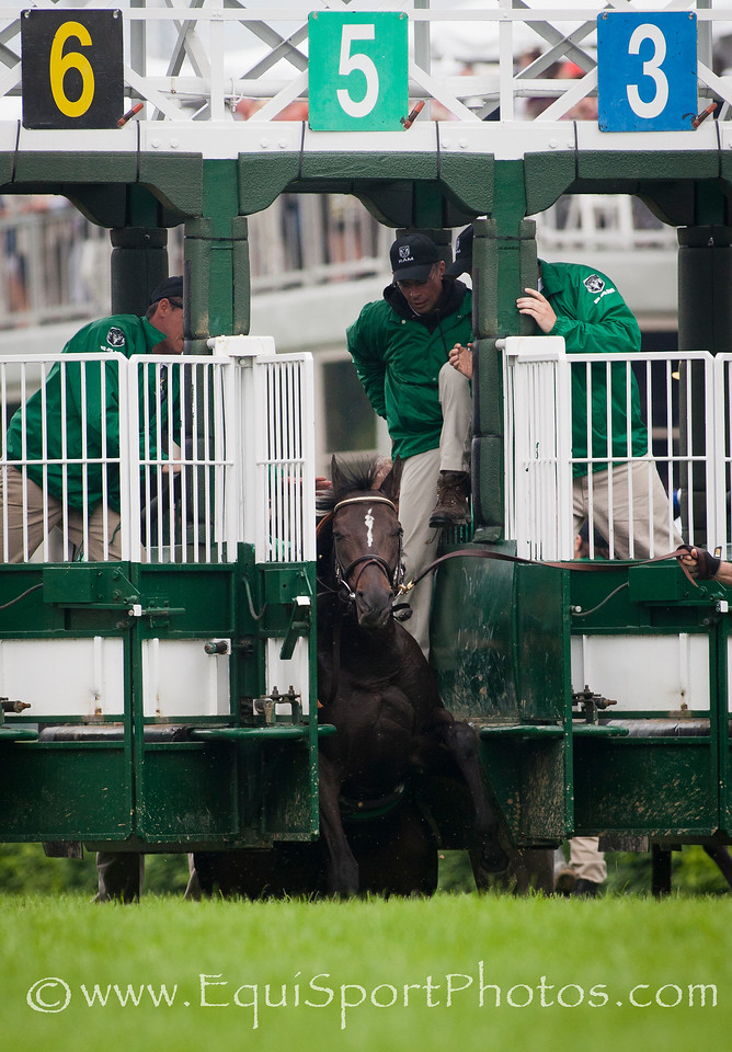 Vivo Per Lei (Empire Maker) goes down in the starting gate during  The Churchill Distaff Turf Mile 05.07.11.  Calvin Borel up, Ian R. Wilkes trainer, Eurowest Bloodstock (Tanya Gunther) owner.