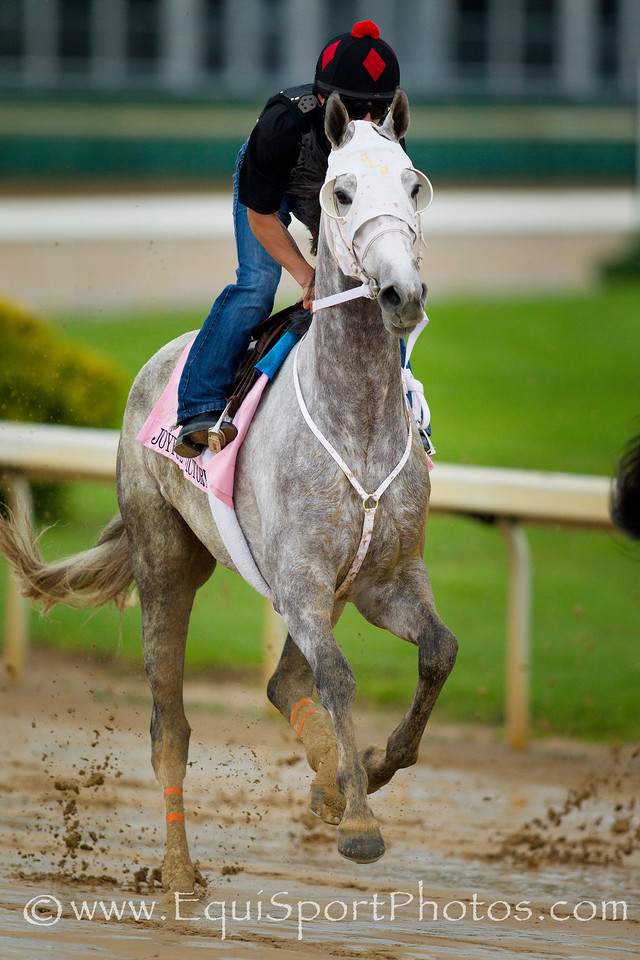 Joyful Victory gallops at Churchill Downs, Louisville KY. May 1, 2011. Credit: Alex Evers/EquiSport Photos
