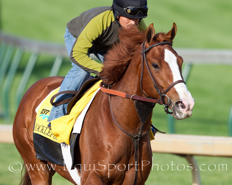Shackleford exercises at Churchill Downs on 4.28.2011