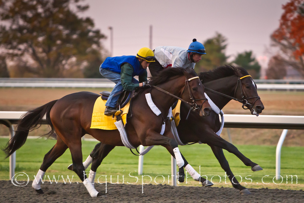 Blame works in company with Super Derby winner, Apart, at Keeneland on 10.24.2010ww