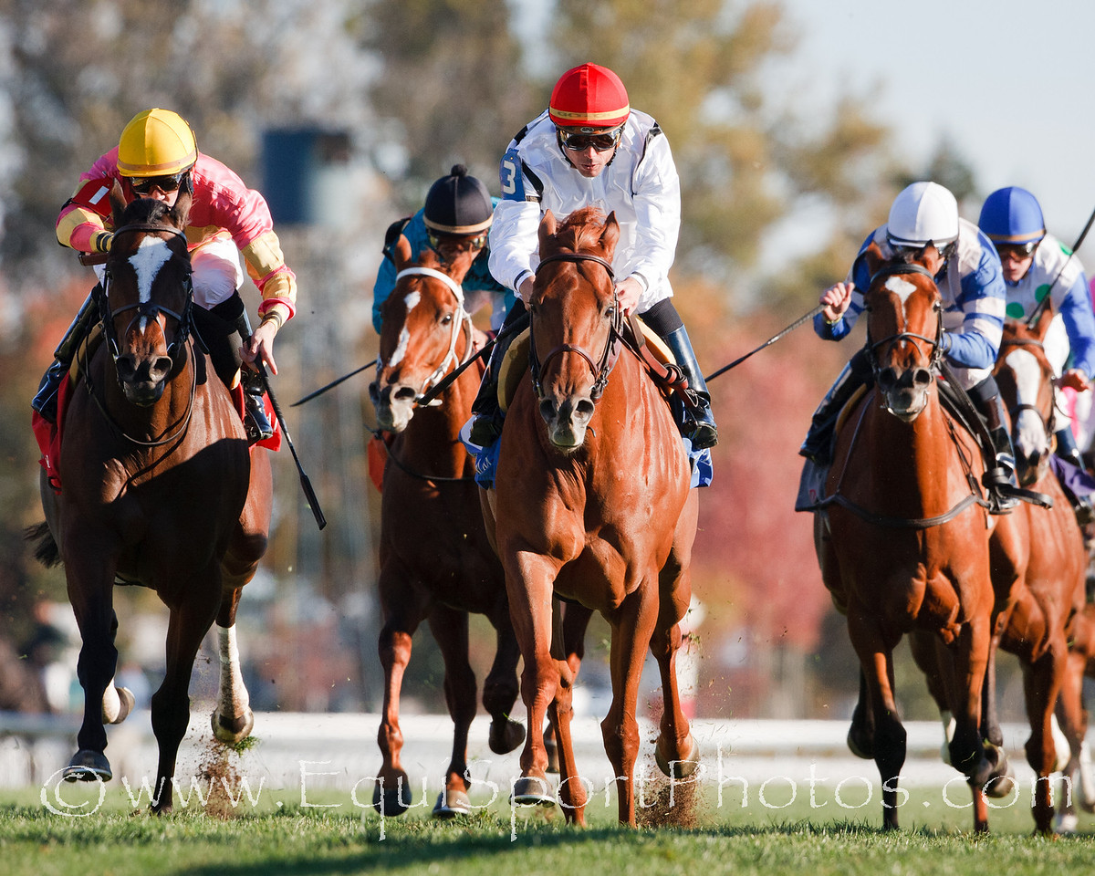 Firey Red (red cap), Garrett Gomez up, finishes second in an Allowance at Keeneland 10.28.2010mw