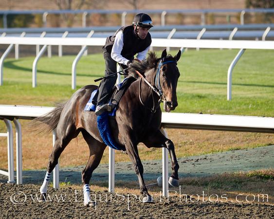 Harmonious, Frankie Harrarte up, gallops at Keeneland 10.29.2010