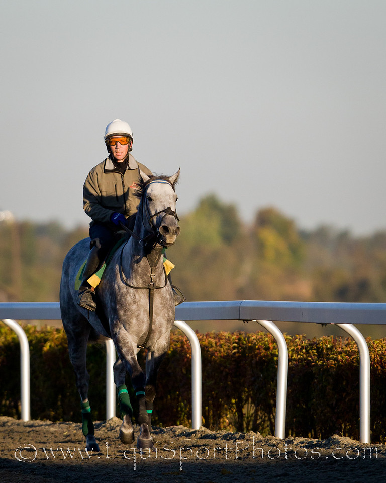 Informed Decision, with Barry Wiseman up, works at Keeneland 10.06.2010mw