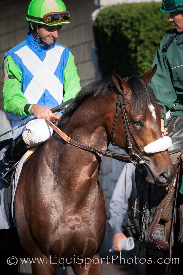 Lentenor, full brother to Barbaro, running in an allowance race at Keeneland on 10.16.2010