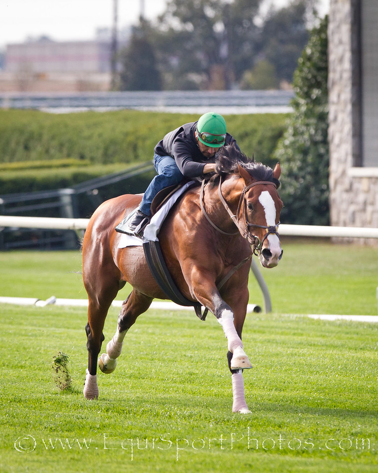 Get Stormy, Javier up, works at Keeneland 10.05.2010mw