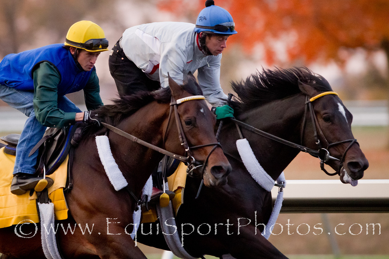 Blame works in company with Super Derby winner, Apart, at Keeneland on 10.24.2010mw