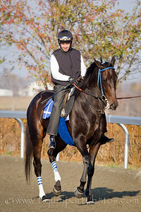 Harmonious, Frankie Harrarte up, gallops at Keeneland 10.29.2010