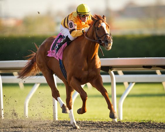 Wise Dan wins the Fayette Stakes at Keeneland on 10.29.2011.  Julien Leparoux up, Charles Lopresti trainer, Mort Fink owner.