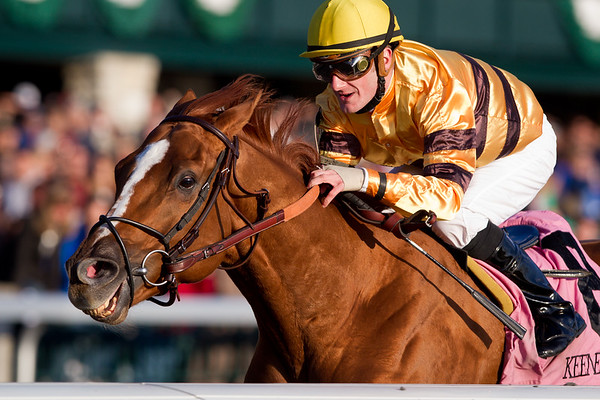 Wise Dan (Wiseman's Ferry), Julien Leparoux up, wins the Fayette Stakes at Keeneland 10.29.2011. Trainer: Charles Lopresti, Owner: Morton Fink