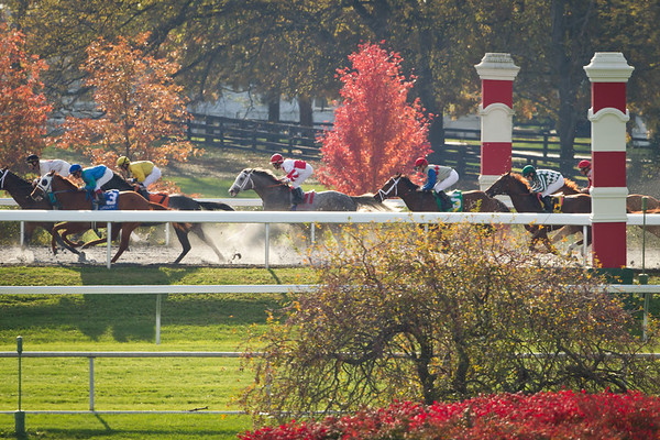 Winslow Homer (gray horse) runnng along the backside of the track in an allowance race at Keeneland on 10.29.2011