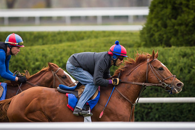 Animal Kingdom works under David Nava at Keeneland 10.26.2012