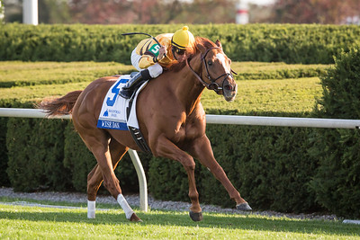 Wise Dan wins the Shadwell Turf Mile at Keeneland.