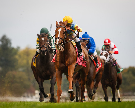 Daytatthespa (City Zip), Javier Castellano up, wins the Queen Elizabeth II at Keeneland 10.13.2012. Trainer: Chad Brown, Owner: Jerry Frankel, Ronald Frankel, Steve Layman and Bradley Thoroughbreds.