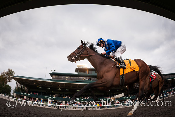 Najjaar (Jazil) wins the Sycamore Stakes (G3) at Keeneland on 10.17.2013.  James Graham up, Daniel Peltz trainer, Shadwell Stable owner.