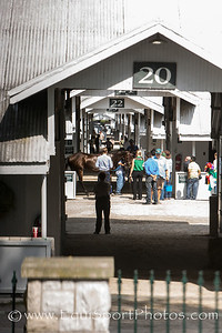 horses walking in the shedrow before heading to the saddling paddock at Keeneland on 10.5.2013