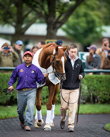 Trainer Charles Lopresti looks on as Wise Dan is paraded at Keeneland for the last time, 10.03.15.