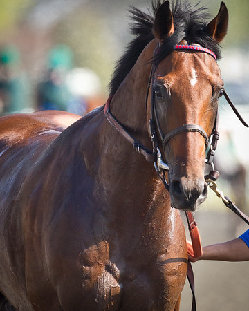 Let's Do It (El Prado) wins a turf allowance race at Keeneland on 4/9/2011.  Owned and bred by Brereton C. Jones, trained by Graham Motion