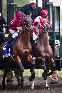 Derby Kitten (Kitten's Joy) at the start of the Lexington Stakes (G3) at Keeneland on 4.23.11.  Julien Leparoux up, Michael Maker trainer, Kenneth and Sarah Ramsey owner.