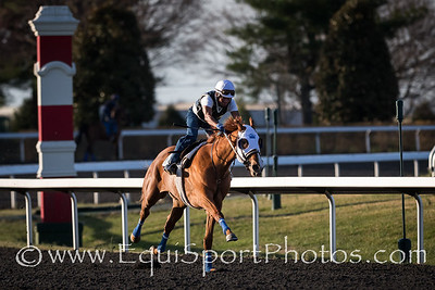 Rosalind, with Rafael Pena up, works at Keeneland 4.01.2014.
