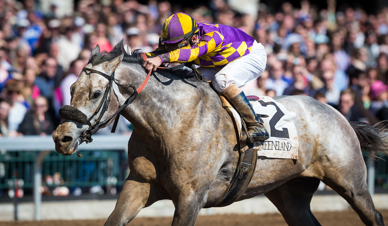 Kobe's Back (Flatter), Gary Stevens up, wins the G3 Commonwealth Stakes at Keeneland 4.04.15. Trainer: Peter Eurton, Owner: CRK Stable.