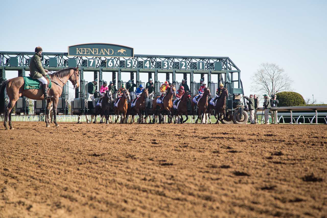 The start of the Ashland Stakes at Keeneland on 4.4.2015.