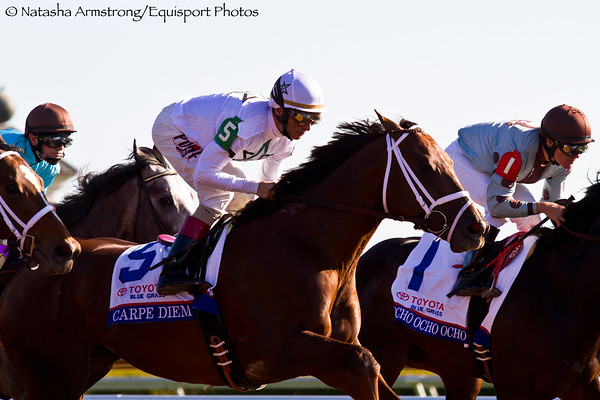 Carpe Diem (Giant's Causeway) wins the Blue Grass Stakes (G1) at Keeneland on 4.4.2015. Johnny Velazquez up, Todd Pletcher trainer, Winstar and Stonestreet stables owners