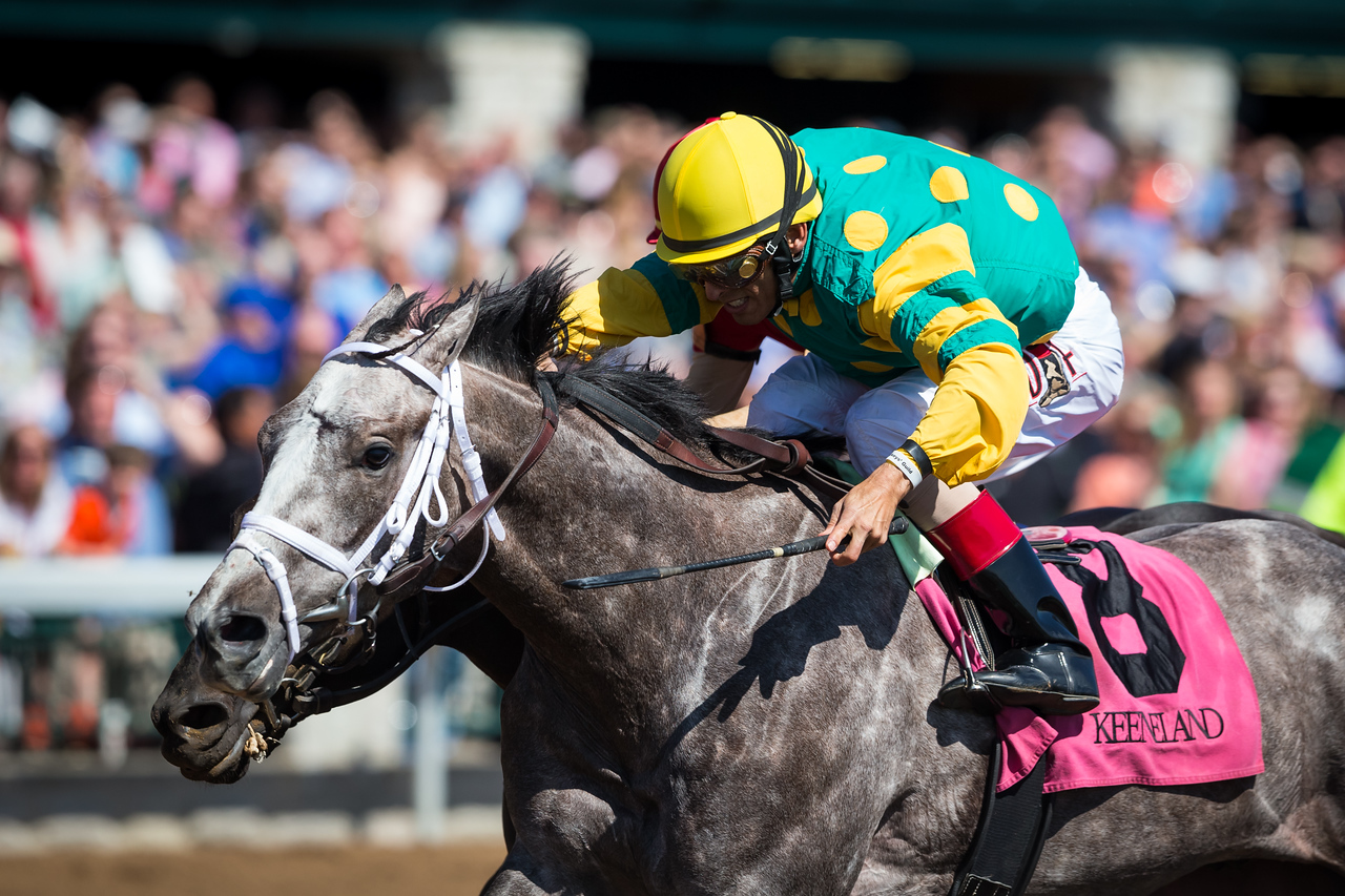 Money Changer (Exchange Rate), John Velazquez up, wins an MSW 4.12.15. Trainer: Todd Pletcher, Owner: Dogwood Stables.