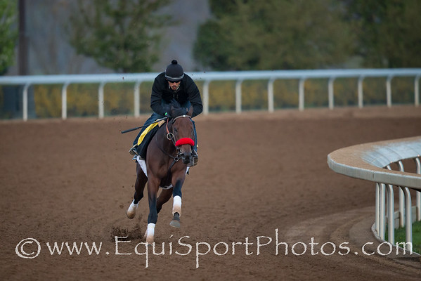 Nyquist works at Keeneland on 4.15.2016