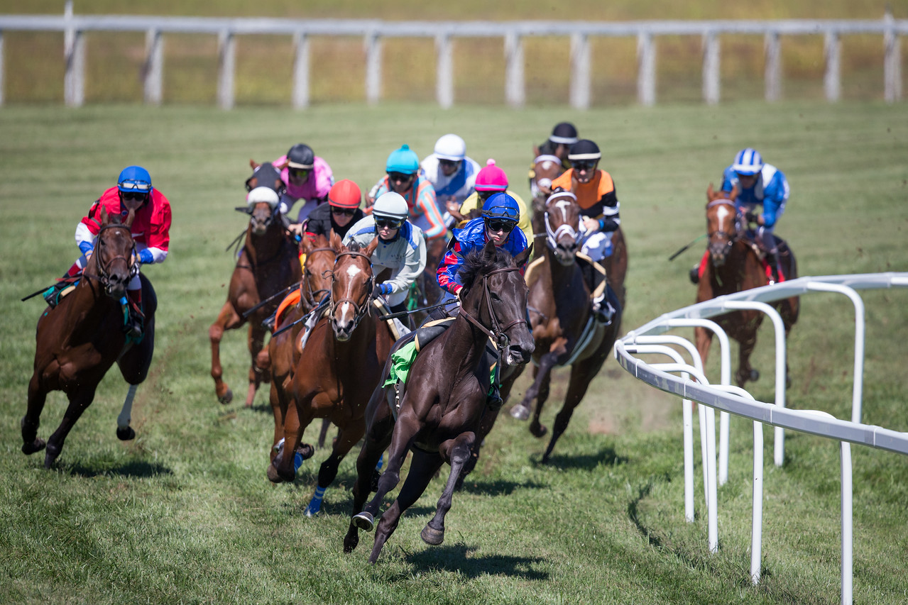Horses making the turn into the homestretch at Kentucky Downs.