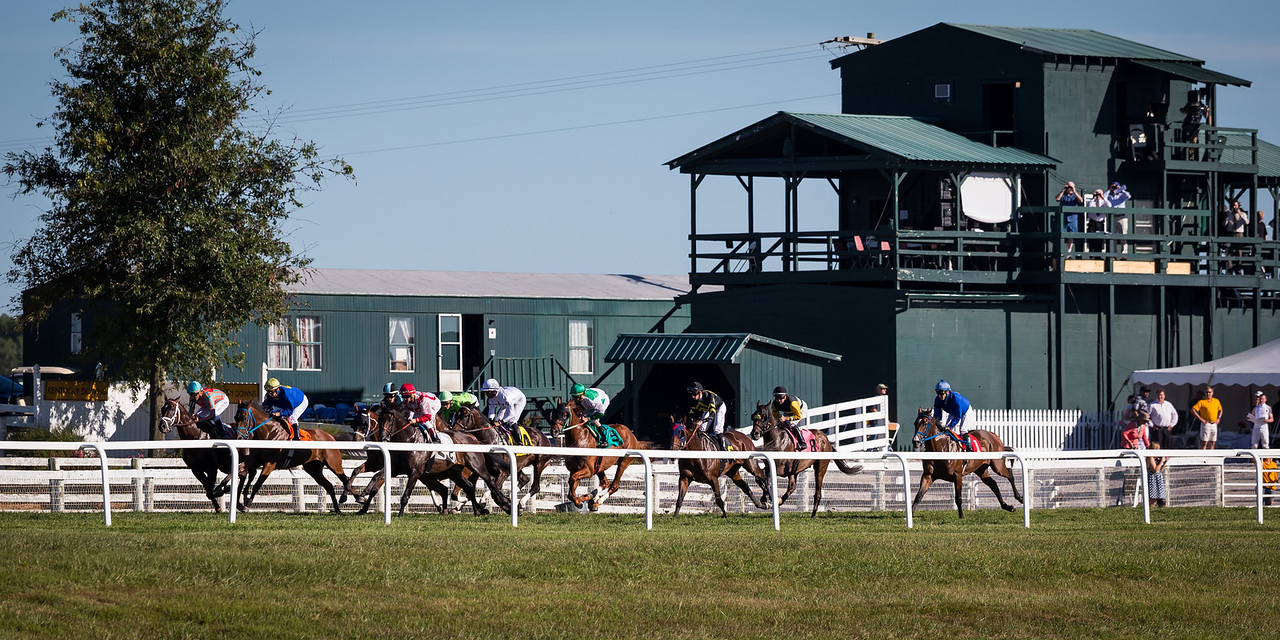 Horses pass the judges stand at Ky Downs 9.14.15.
