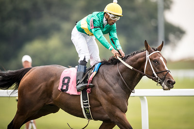 Campaign (Curlin) with the yellow cap, battles it out in the stretch to win a 1 5/16th mile allowance race at Kentucky Downs on 9.8.2018. Ricardo Santana up, Steve Asmussen trainer, Woodford Racing owners.