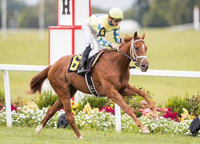 Unapologetic Me (Trappe Shot), Tyler Gaffalione up, wins a Maiden race at Kentucky Downs 9.08.18. Trainer, Michael Maker. Owner Kendall Hansen