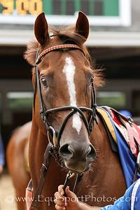Brujo de Olleros (Wild Event) before the Majestic Light Stakes at Monmouth Park 7/29/12. Trainer: Graham Motion. Owner: Team Valor & Richard Santulli