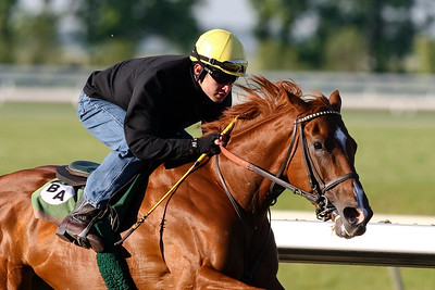 Golden Doc A (Unusual  Heat), with Mick Ruis up, works at Keeneland 5.24.08
