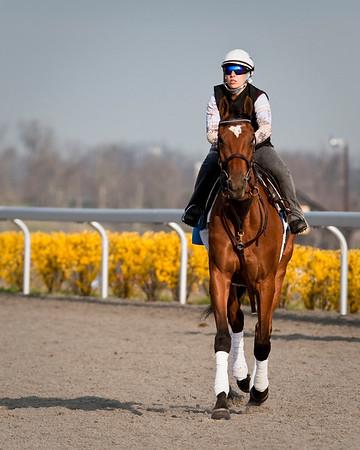 23 March 2009: Dream Empress (Bernstein), Jessica Oldham-Stith up, gallops at Keeneland Race Course, Lexington, Kentucky