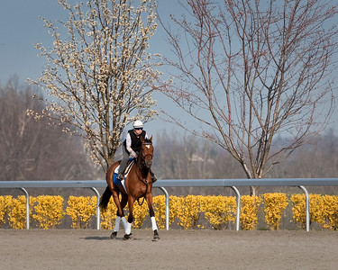 23 March 2009: Dream Empress (Bernstein), Jessica Oldham-Stith up, gallops at Keeneland Race Course, Lexington, Kentucky