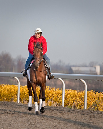 Free Country (Big Country), Travis Warken up, gallops at Keeneland Race Course, Lexington, Ky. 03.24.2009