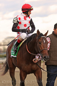 To Honor and Serve (Bernardini) and jockey John Velazquez after winning the Remsen Stakes at Aqueduct 11/27/10 JH.