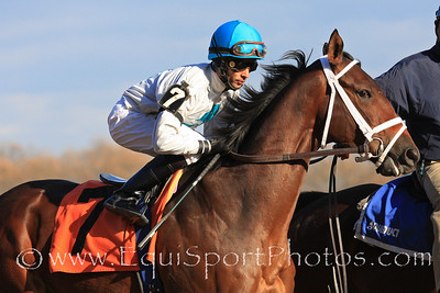 Rocking Out (Include) and jockey Jose Lezcano go to post for a maiden race at Aqueduct 11/27/10 JH.