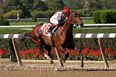 To Honor and Serve (Bernardini) and jockey John Velazquez win a maiden race at Belmont Park 10/2/10 JH.