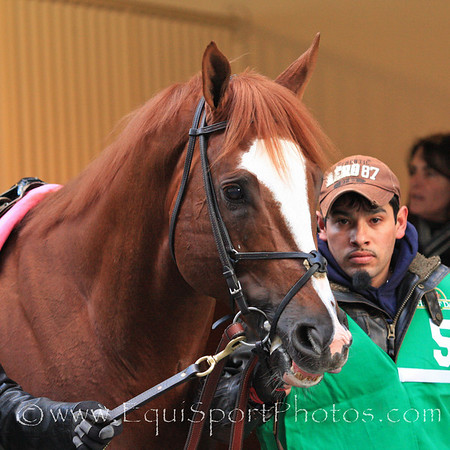 Jersey Town (Speightstown) before the Cigar Mile Handicap at Aqueduct 11/27/10 JH.