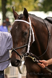 Justin Phillip (First Samurai) before a maiden race at Belmont Park 9/18/10 JH.