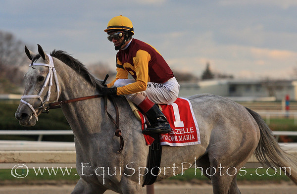 Awesome Maria and jockey John Velazquez returna after the Gazelle Stakes at Aqueduct 11/27/10 JH.